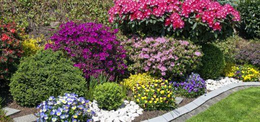 angolo di fiori