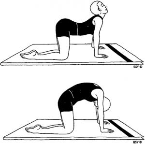 esercizi yoga scoliosi