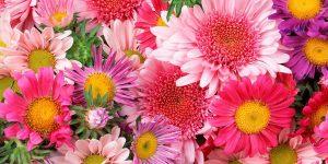 senso di solitudine fiori di bach